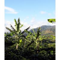 Alto Verde, Yello Honey Costa Rica táj